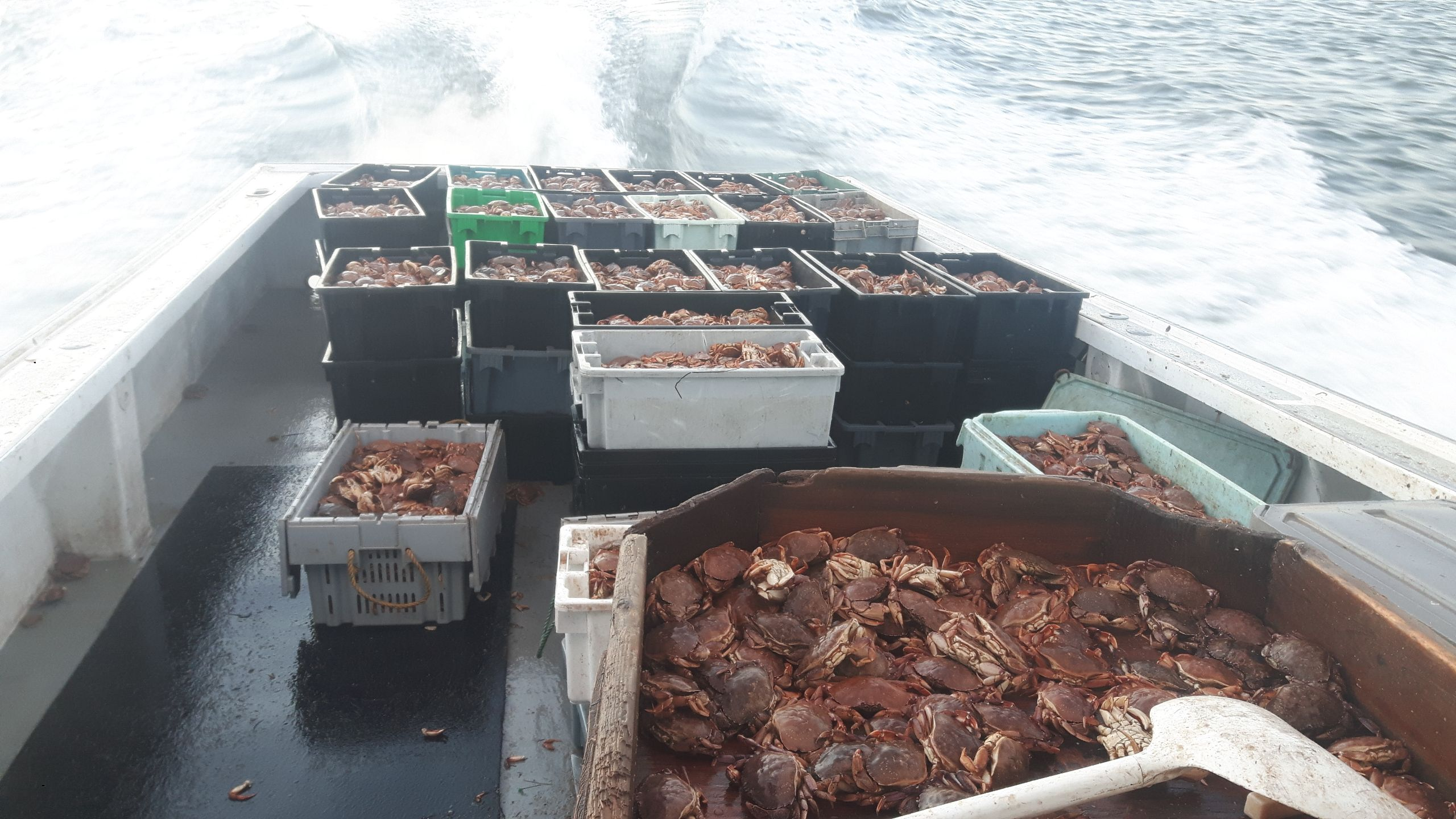 The back of a fishing boat on the water filled with containers of caught crabs.