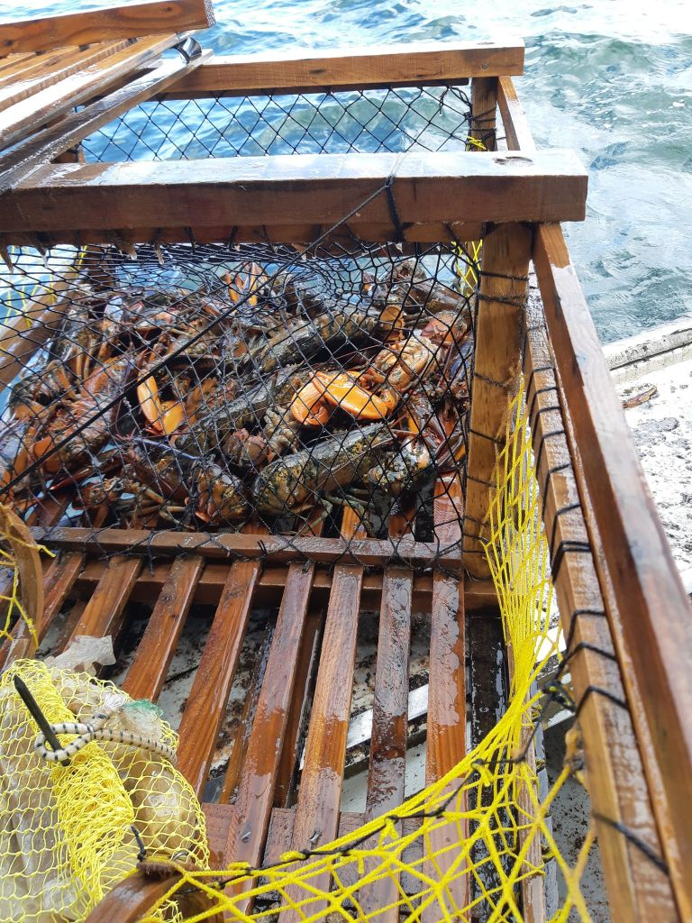 a lobster trap now filled with lobster