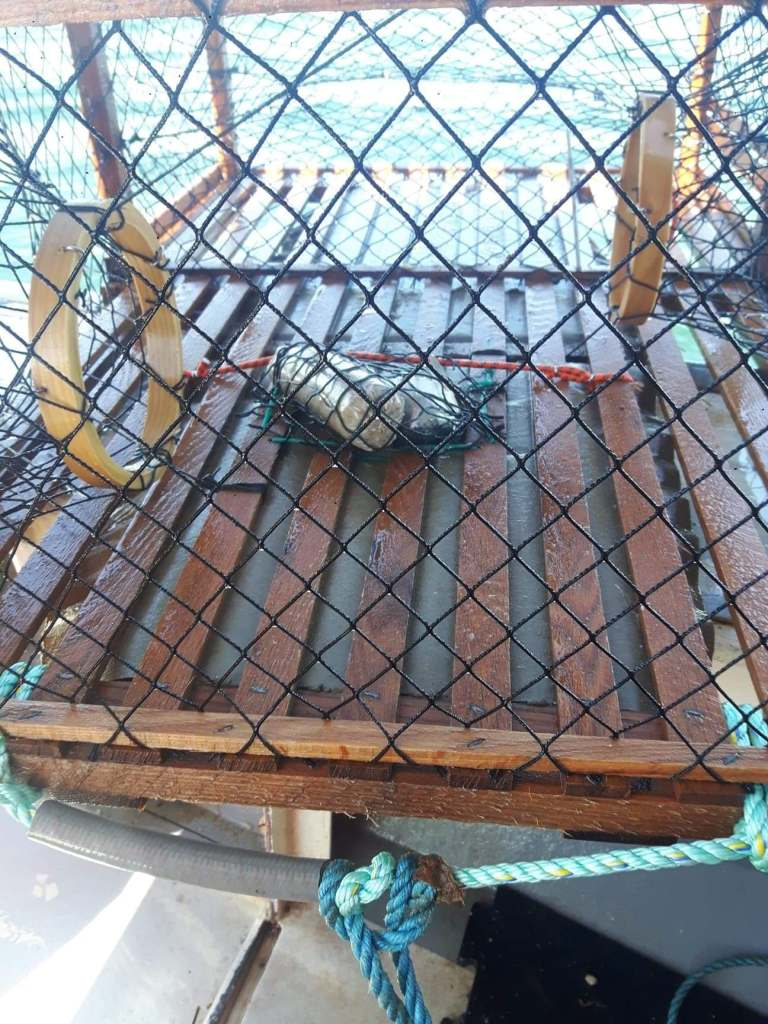 a photo of a lobster trap with bait inside